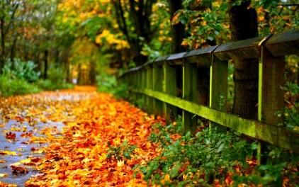 6952104-beautiful-autumn-pictures