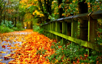 6952104-beautiful-autumn-pictures